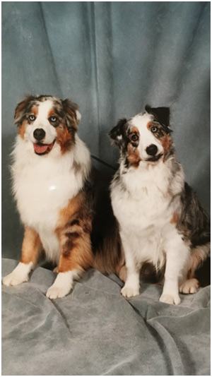 australian-shepherd-homespun-kennel-ny-sidebar-04