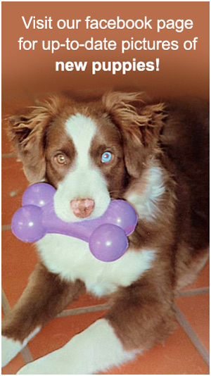 side-bar-puppies-for-sale